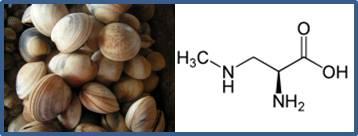 Neurotoxina BMAA